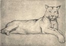 Richard Flockenhaus – Pategonian Puma – Signed Original Artist's Engraving