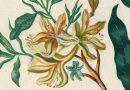 Original 1809 Drawings by Max and Joseph Loewenthal – Botanicals