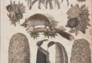 Three English Victorian Collages – Plants and Animals