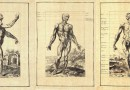 Male Anatomy – Notomie di Titiano – Beautiful Early 20th Century Reproductions